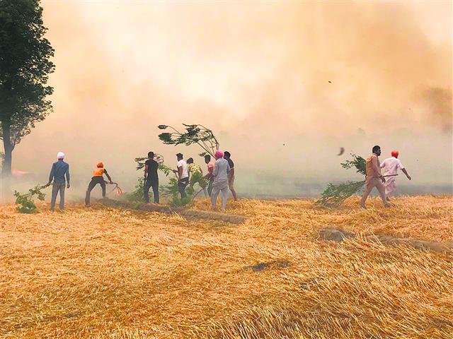 ਪਿੰਡ ਕੈਰੇ ਵਿੱਚ 19 ਏਕੜ ਕਣਕ ਦੀ ਫ਼ਸਲ ਸੜੀ