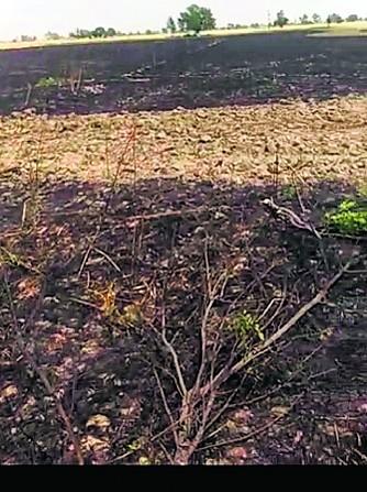 ਬਠਿੰਡਾ ਜ਼ਿਲ੍ਹੇ ਦੇ ਤਿੰਨ ਪਿੰਡਾਂ ਵਿਚ 15 ਏਕੜ ਕਣਕ ਸੜੀ