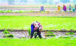 ਨਵੇਂ ਖੇਤੀ ਕਾਨੂੰਨ: ਮਜ਼ਦੂਰ ਵਰਗ 'ਤੇ ਸੰਭਾਵੀ ਅਸਰ